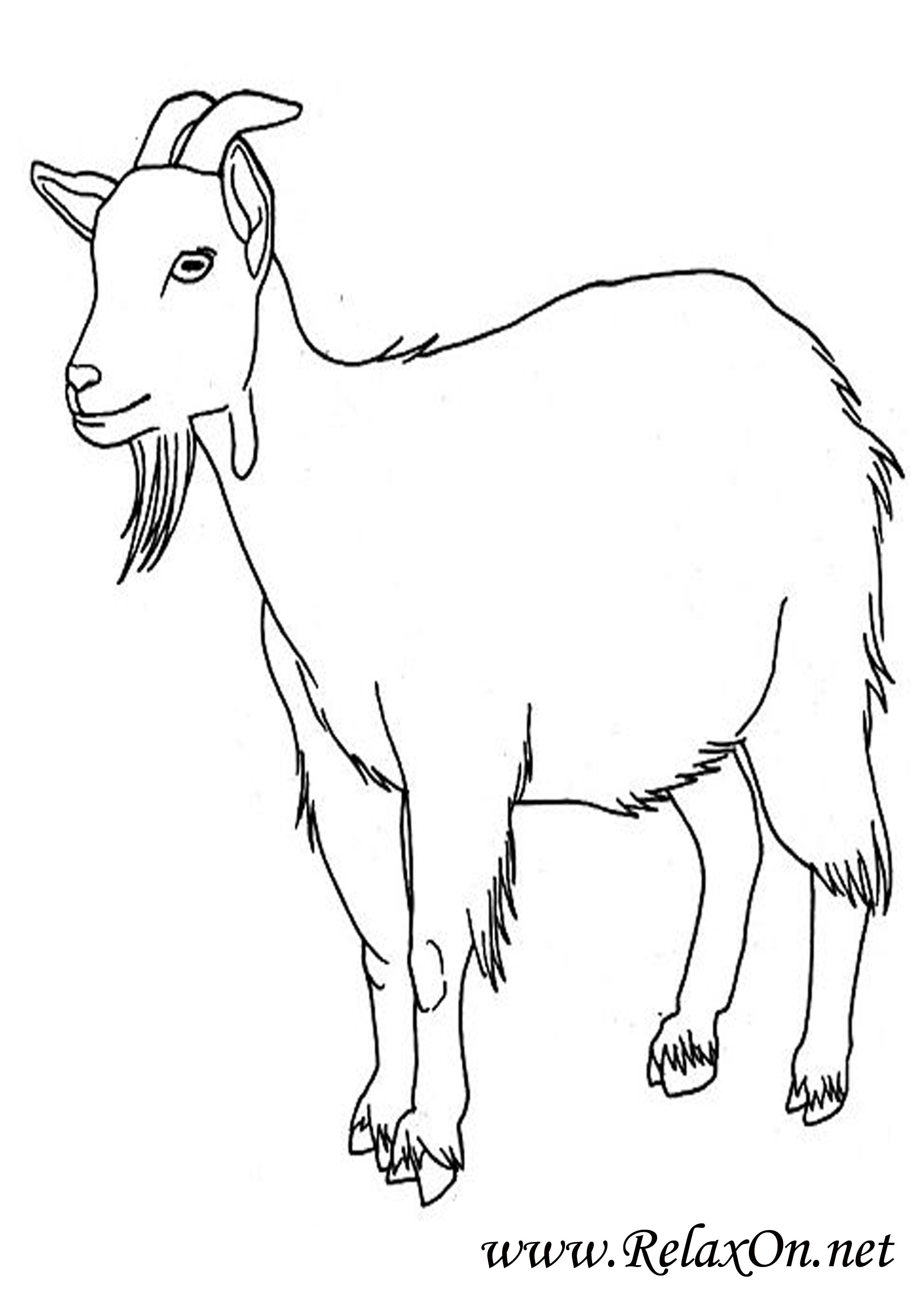 Коза 1