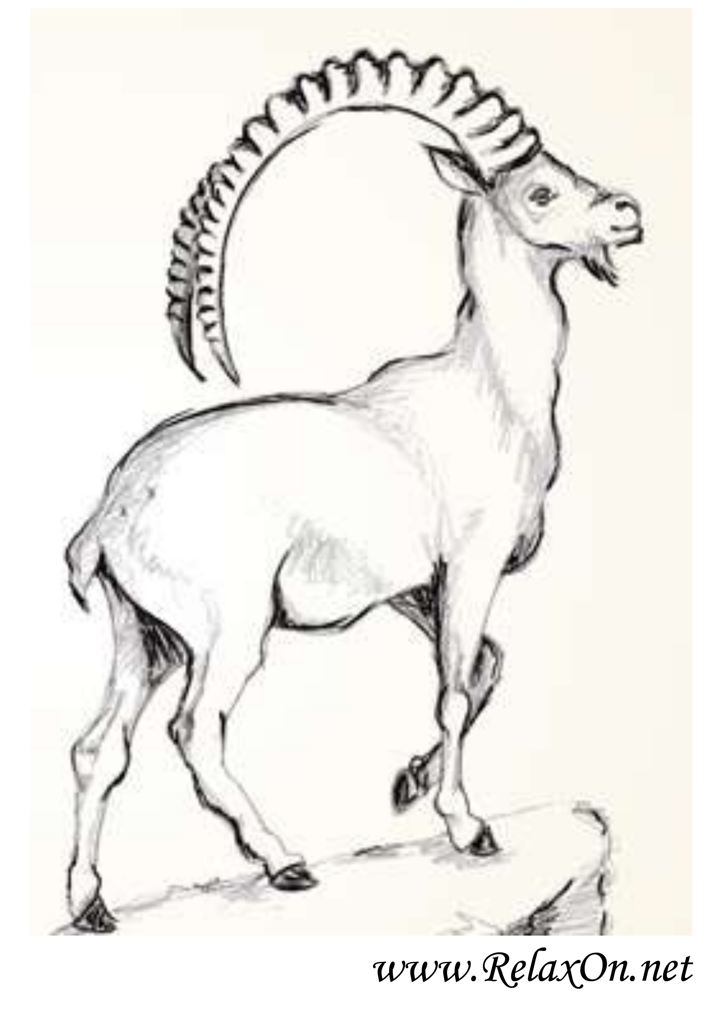 Коза 2