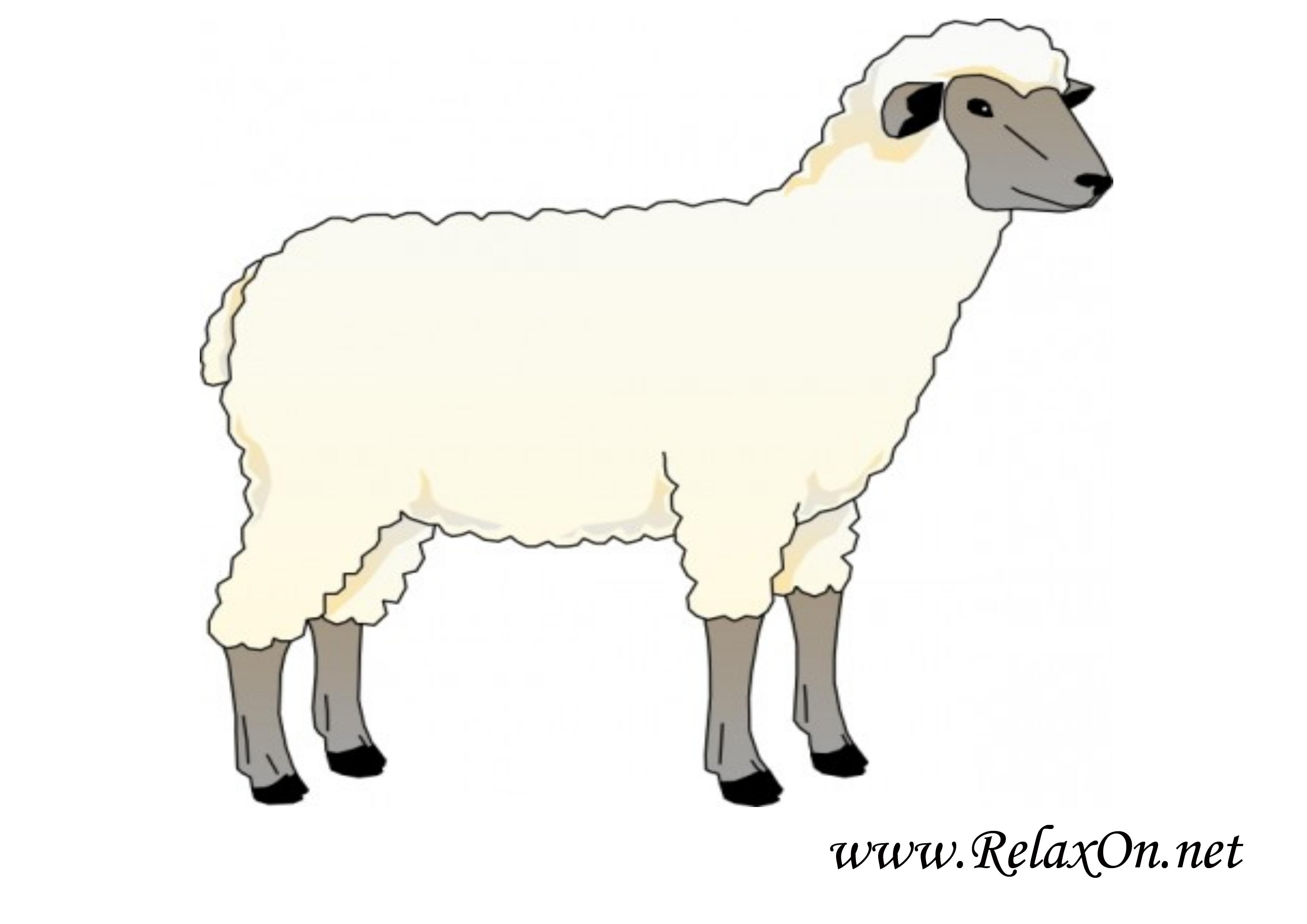 Овца 11