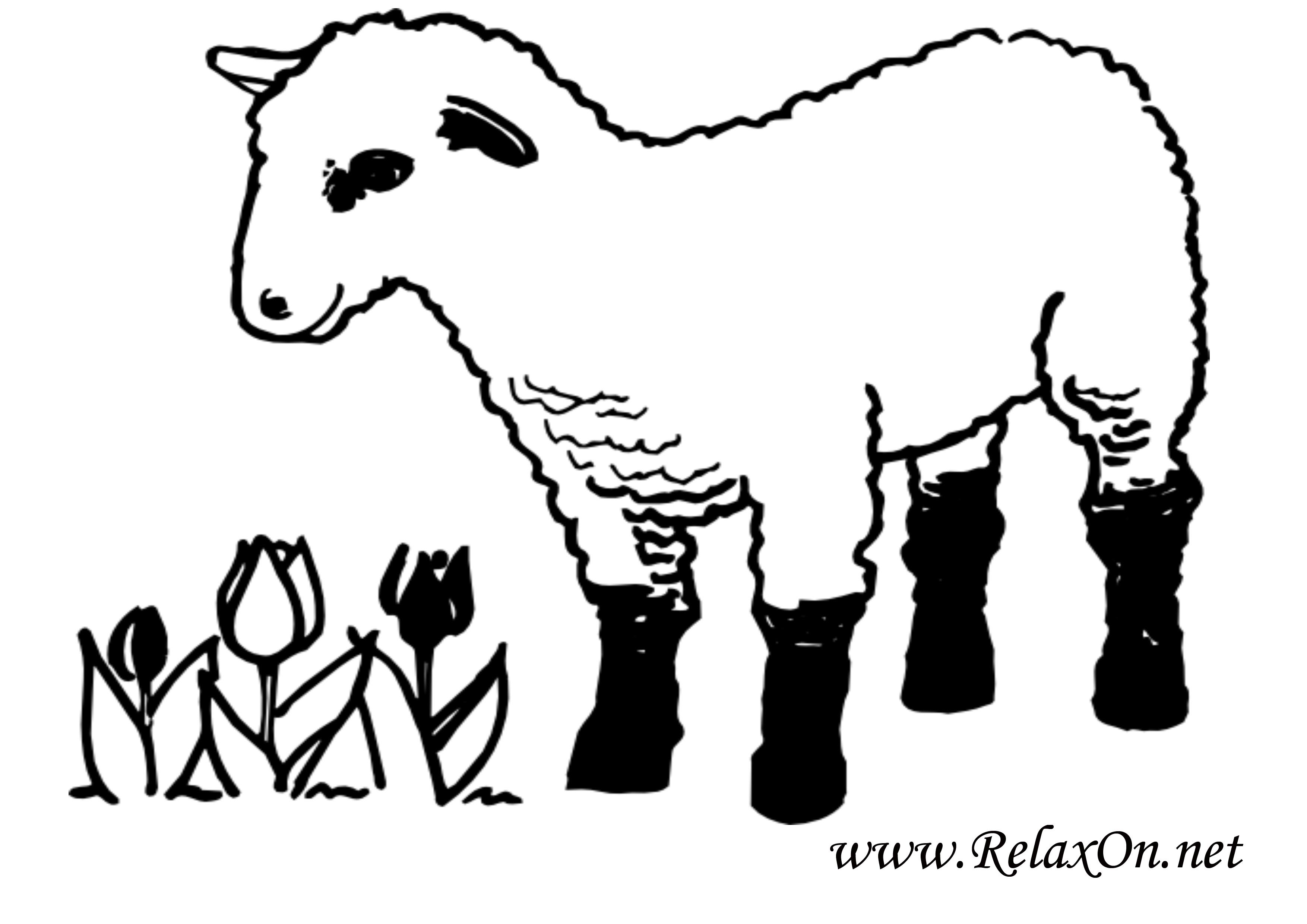 Овца 4