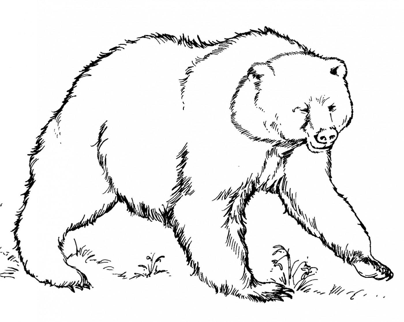 Раскраски медведей распечатать